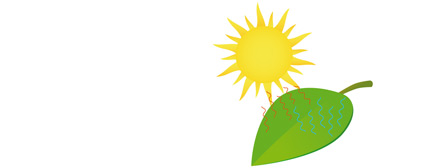 kol_fotosyntes